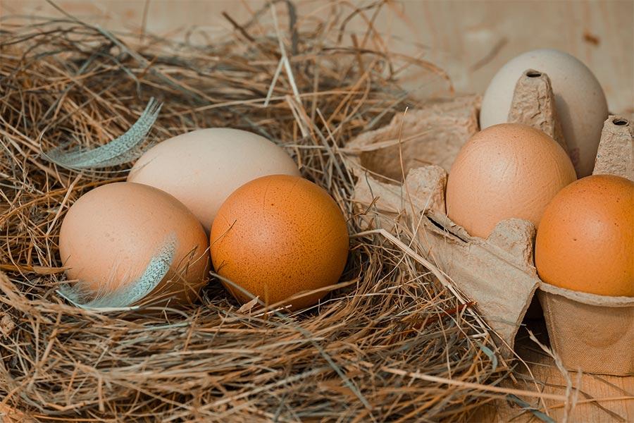 Frische Eier von Obermeier