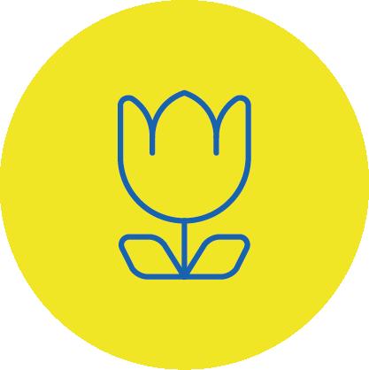 Frische Schnittblumen im EDEKA in Buchbach